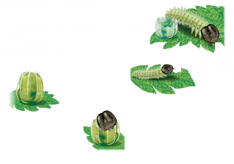 Caterpillar Birth