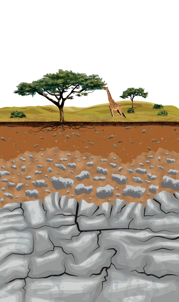 Grasslands Soil Structure