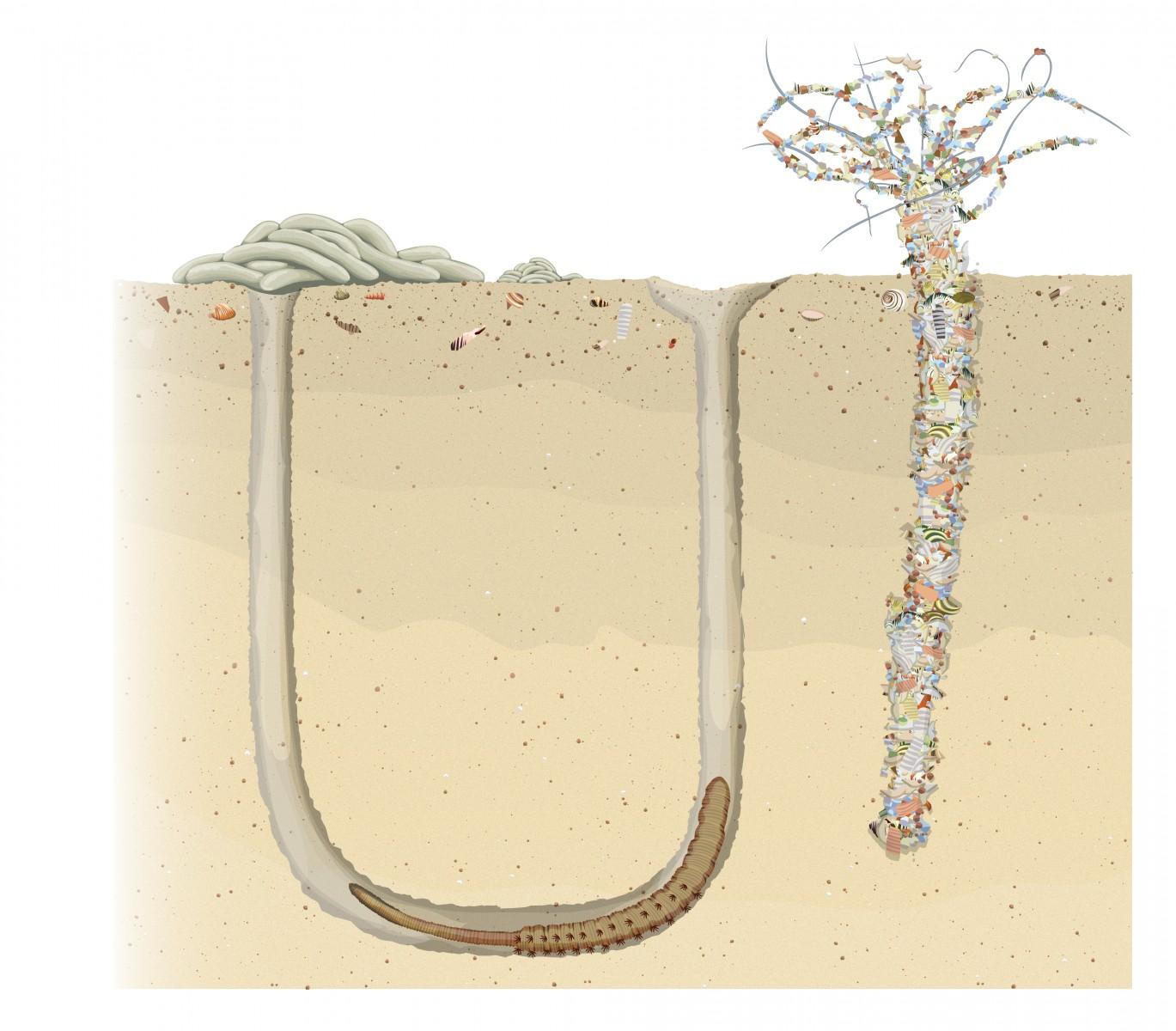 Dan Crisp Illustration