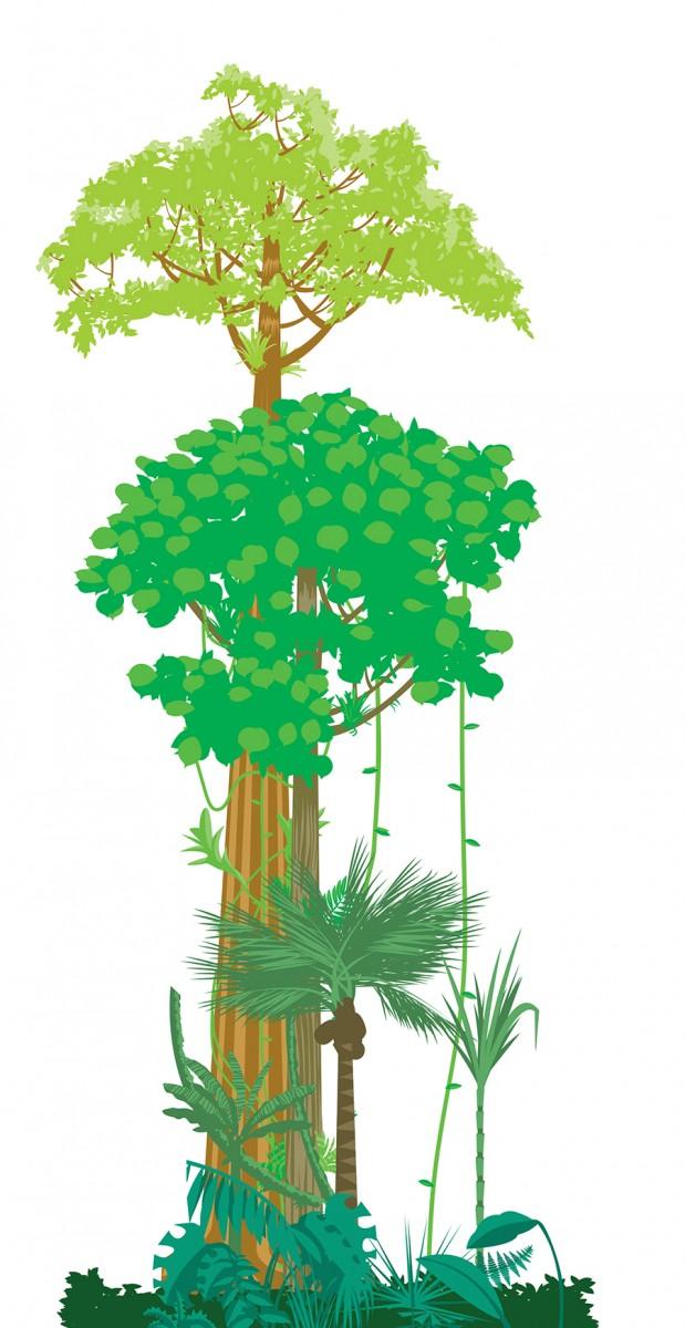 Jungle Layers