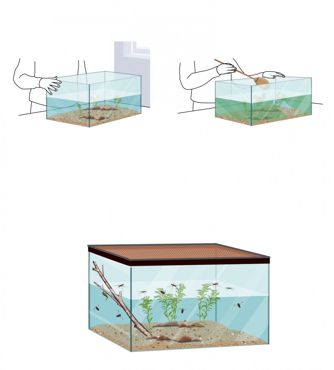 Making an Insect Aquarium
