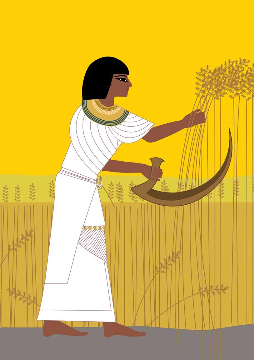 Shemu Harvest