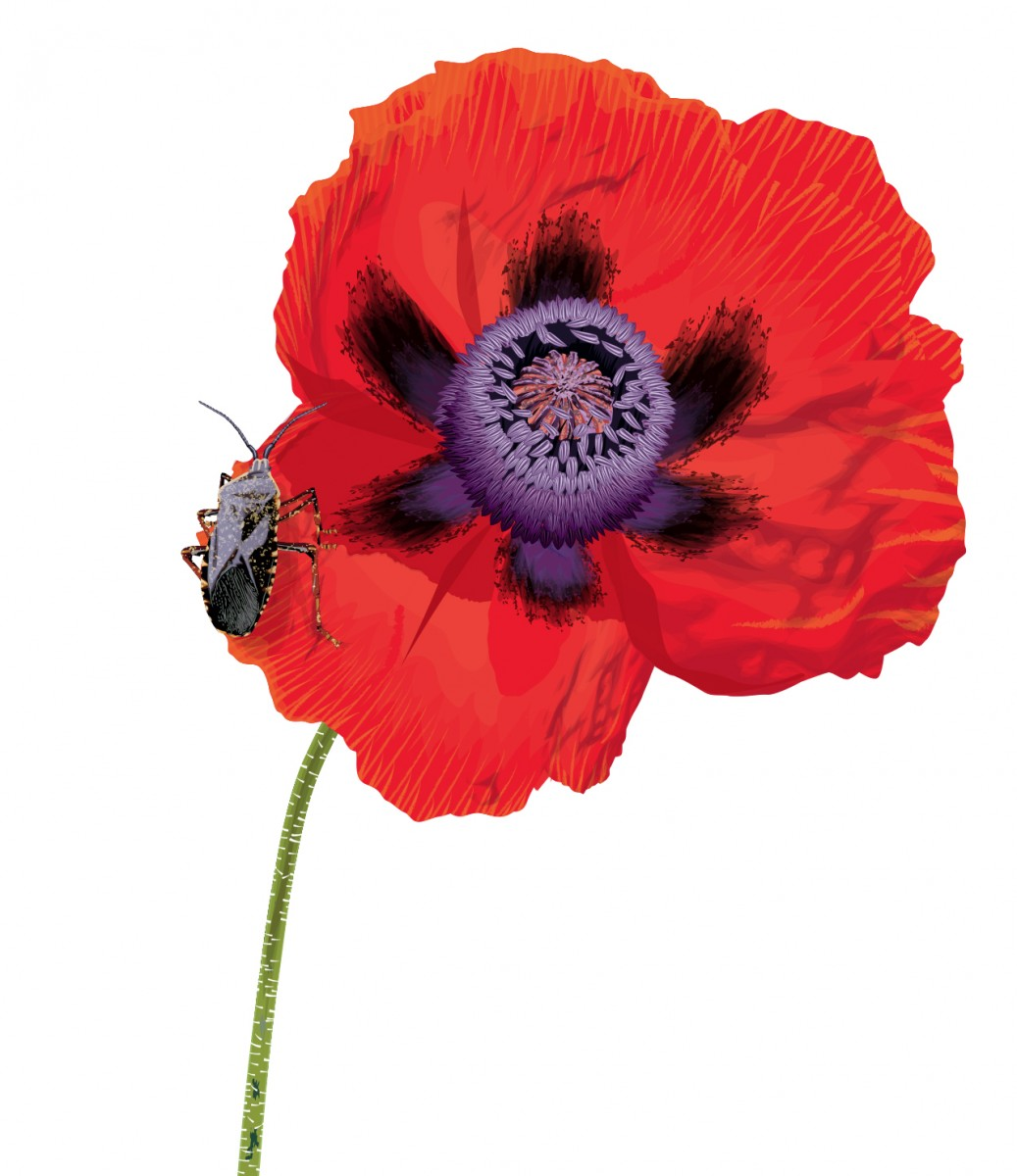 Poppy and Beetle