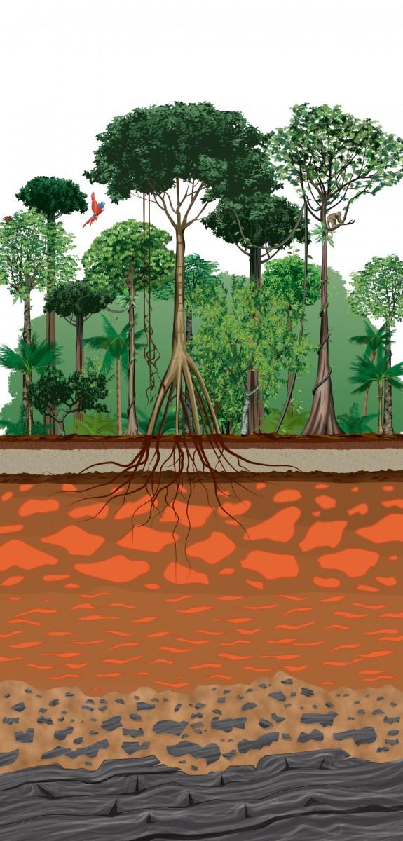 Rainforest Soil Structure
